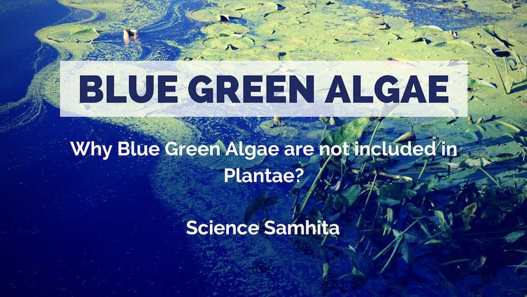 Why Blue Green Algae are not included in Plantae Kingdom?